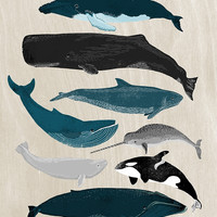 Whales - Pod of Whales Print by Andrea Lauren by Andrea Lauren