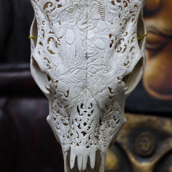 Beautiful Ganesha Hand Carved Steer/ Cow Skull with Horns/ Bull/ Longhorns/ Antique Buffalo Taxidermy