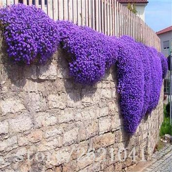 200 pcs Flower seeds Creeping Thyme Seeds Perennial Ground cover garden decoration flower