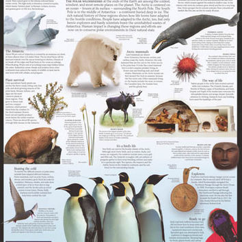 Arctic and Antarctic Infographic Poster 24x36