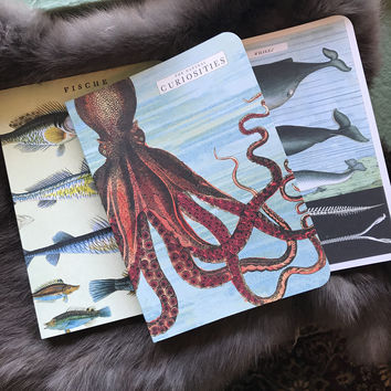 Sea Life - Mini Notebook Set