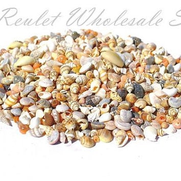 Horizon Sea Shells Mixed Bulk Conch Lot Tiny Craft Seashell