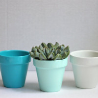 "2"" Beachy Planters Set, Succulent Planters, Petite Planters, Party Favors, Succulent Pot"