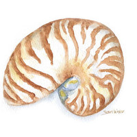 Nautilus Watercolor Painting - 5 x 7 - Giclee Print - Beach Summer Painting - Seashell