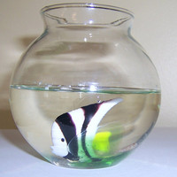 Angel fish Paperweight, tropical fish water globe