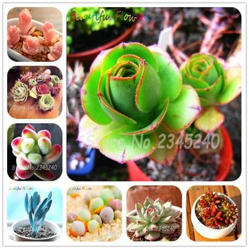 50 Pcs Colorful Meaty Plant Seed Succulent Plant Seeds Fleshy Bonsai Seeds Mini Carnivorous Plants Pot Flowers Meaty Plant Seeds