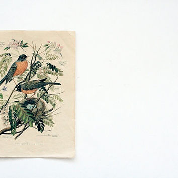 Vintage Bird and Botany Print - Arthur Singer Bird Print - 1957 - Natural Home Decor, Bird Art, Spring is Coming, Mid-Century Home