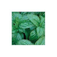 Genovese Sweet Basil Herb 100 Seeds -GARDEN FRESH PACK!