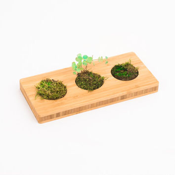 bamboo inspirating desk accessory - weedgarten