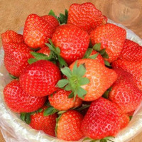 Organic Heirloom 1500 Strawberry Seeds Strawberries Red Garden Fruit Edible A0001