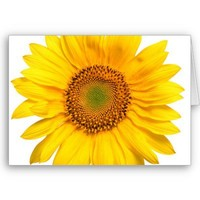 Sunny The Sunflower Card from Zazzle.com