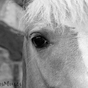 Black and White Horse Art Photography - Abstract Animal Eye Print