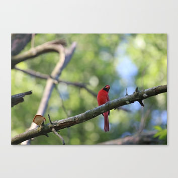 Cardinal IV Canvas Print by Theresa Campbell D'August Art
