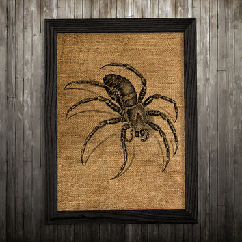Wildlife poster Spider print Insect art Burlap print BLP65