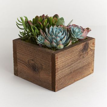 "LIVE 6"" Rustic Wood Pre-Potted Succulent Planter - Ships Alone"