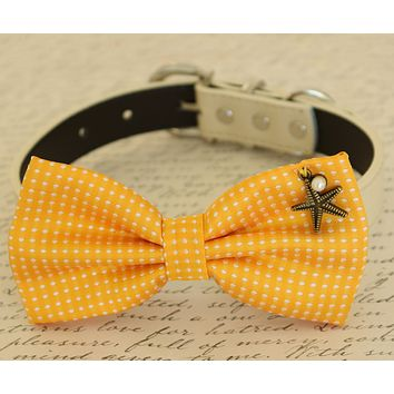 Yellow Dog Bow tie attached to collar, beach, Polka dots