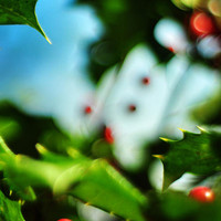 Holly Daze Photograph by Rebecca Sherman - Holly Daze Fine Art Prints and Posters for Sale