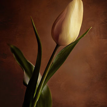 Flower photography nature photography still life photo print wall art rustic wall decor brown yellow tulip vintage home decor wall art