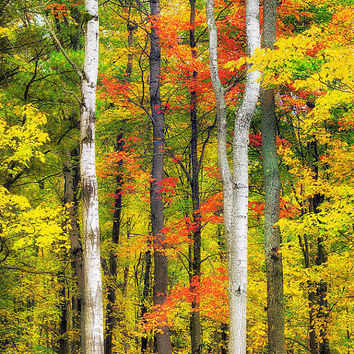 Autumn Decor, Fall Prints, Autumn Trees, Nature Photography, Fall Foliage, Trees, Leaves, Wall Art Trees, Colorful Leaves, Photo Prints