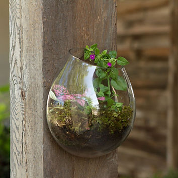 Wall Terrarium, Succulent Garden, Hand Blown Glass Terrarium, Recycled Glass Terrarium