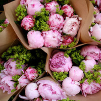 5x5 peonies in zurich limited edition