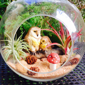 Owl Terrarium Kit ~ Owl and baby owl on a Log ~ Air Plant Terrarium ~ Large Glass Terrarium ~ 2 Air Plants ~ Sand choice ~ Gift ~ Christmas