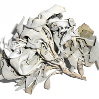 White Sage, Ethically-Wildharvested - Ceremonial, Traditional Herb