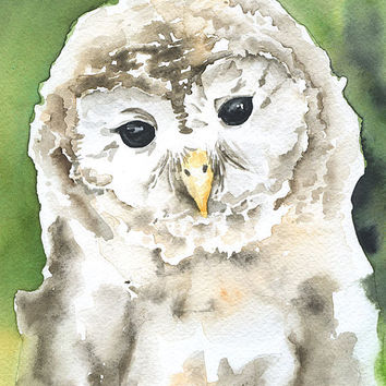 Barred Owl Watercolor Painting Giclee Print 5 x 7