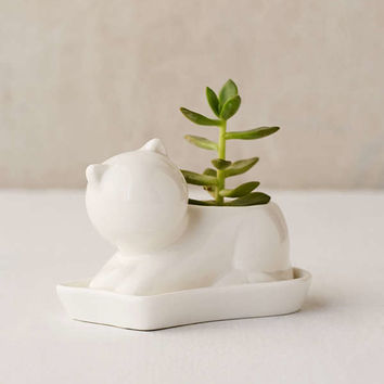 Kitty Succulent Planter   Urban Outfitters