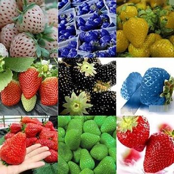 MXLUODX 200pcs/bag Strawberry Seeds Organic Fruit Seeds Vegetables Japanese Non-GMO Bonsai Pot For Home Garden Plants Seeds