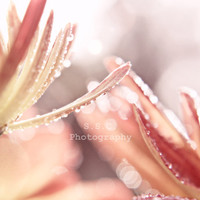 "Pink Flower Photo. ""Sunlit"" 8x8 inch Photo. Pale Pink peach waterdrops petals sparkle sunny spring pretty feminine"