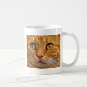 amazing cat close up coffee mug