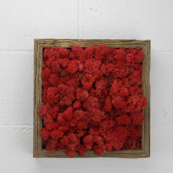 "Red Moss Frame - Water free red moss wall art, preserved red moss - Vertical garden, red moss wall decor - 12""x 12"" Rustic Frame"