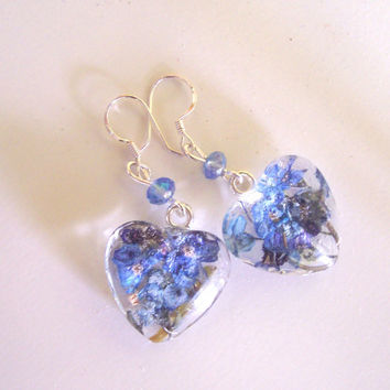 Real Forget me not Glass Sterling Silver Heart Drop Earrings