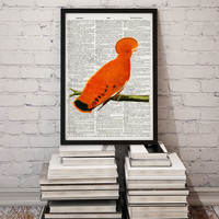 Parrot poster Animal decor Bird print