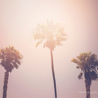 Sunkissed Venice Beach Palm Trees Fine Art Print Summer Photography Los Angeles California Beach Cottage Decor Travel Photo