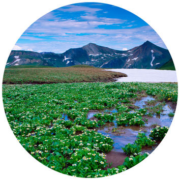 Paul Moore's Marsh Marigolds, Crested Butte Colorado Circle wall decal