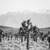 Death Valley Joshua Tree Photography, Mountains California Fall Autumn Winter Bohemian Print Travel Black and White