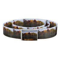 Red and Yellow Fall Birch Trees Belt