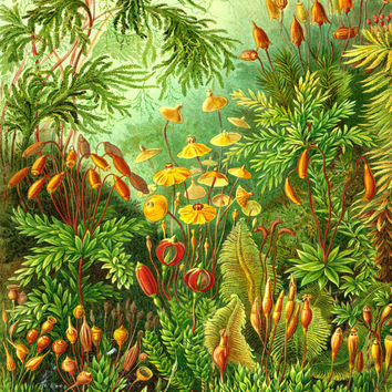 Art Nouveau Botanical Poster - Ernst Haeckel Natural History Scientific Illustration - Moss & Wildflowers Art Print