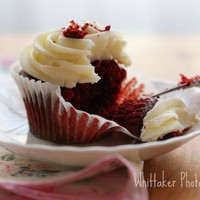 Red Velvet -4x6 Fine Art Photograph