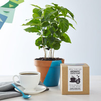 Corporate Grow Your Own Coffee Plant Kit