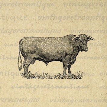 Digital Bull Printable Image Farm Animal Download Cow Graphic Vintage Clip Art for Transfers Printing etc HQ 300dpi No.3153