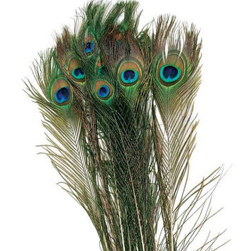 25 Natural Peacock Feather For Wedding Decoration LONG 50CM 19''