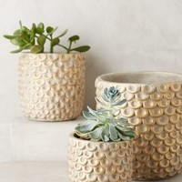 Gilded Scalloped Pot by Anthropologie in Gold Size: