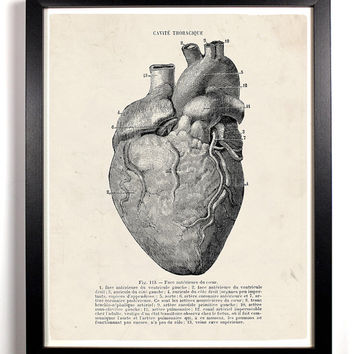 Shop Anatomy Of The Human Heart On Wanelo