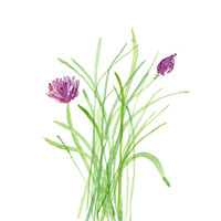 Chives, print of  original watercolor painting, botanical herb print , green, purple plant, wall decor, kitchen art , cottage chic