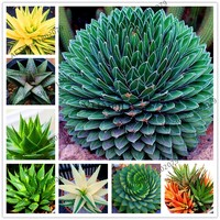 100pcs Succulents Seed Plant,Aloe Vera Seeds,Beauty Edible Cosmetic Bonsai Plants Seeds Perennial Flowers Garden