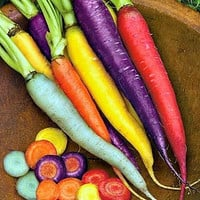 100 Rainbow Carrot Seeds Vegetable Fruit Health Nutrition Care Gardening Plant Growing Decor DIY Home non-GMO Organic