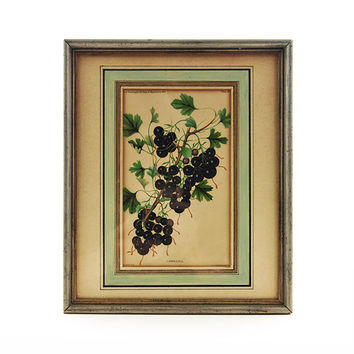 Antique Lithograph Print, Crandall Black Currants, W. H. Prestele Agriculture Print, Dept. of Agriculture,